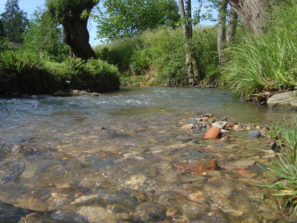 Walk 13 Discover the source of the River Isbourne